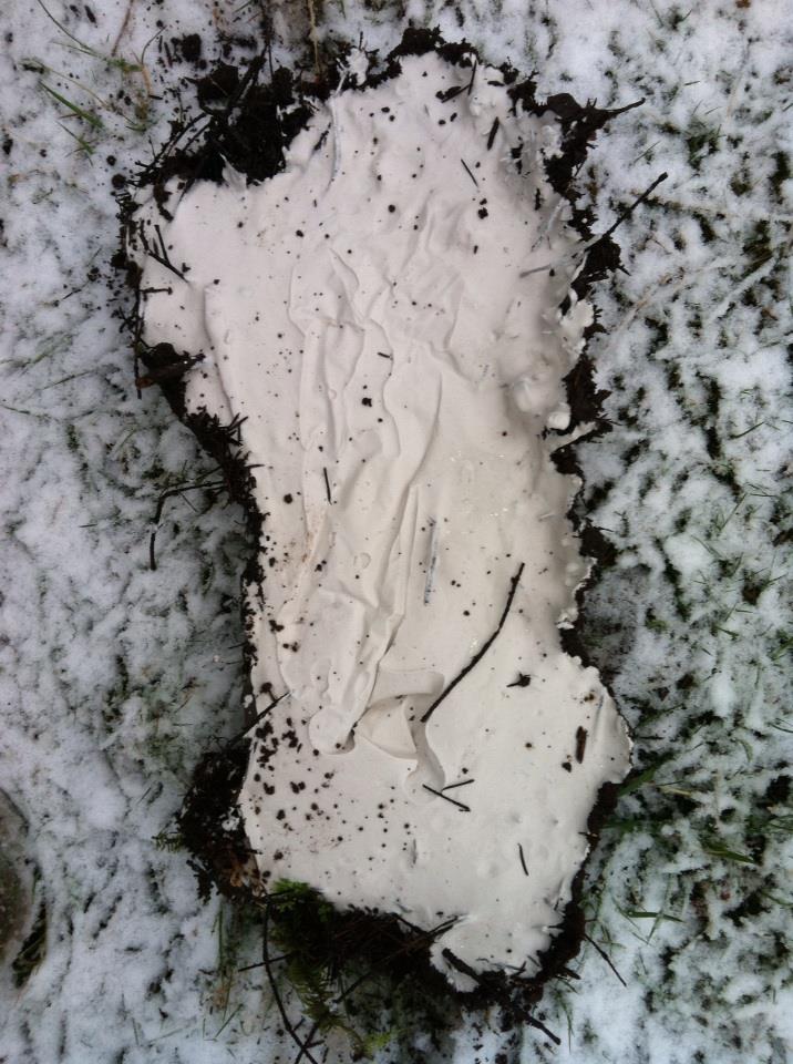 A cast of a suspected bigfoot