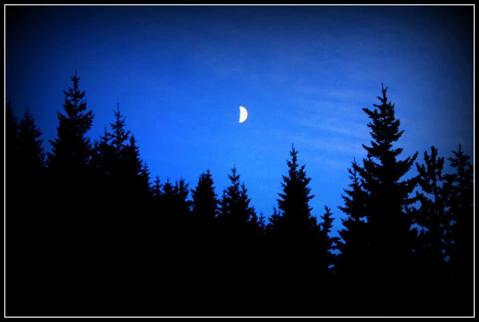 Sasquatch Moonlight
